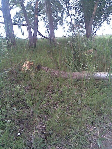 Azok a bizonyos védett fák!!!