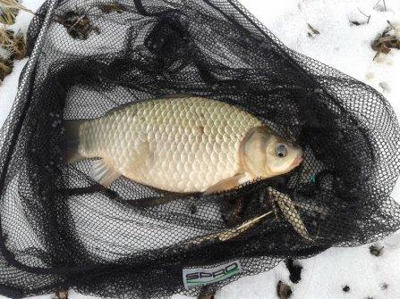 Az első merítendő méretű hal ez a termetes ezüstkárász